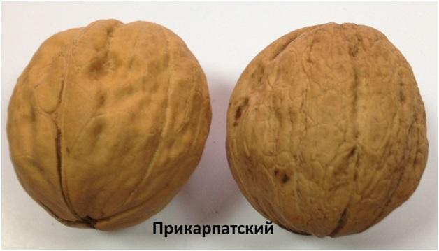Прикарпатский-1